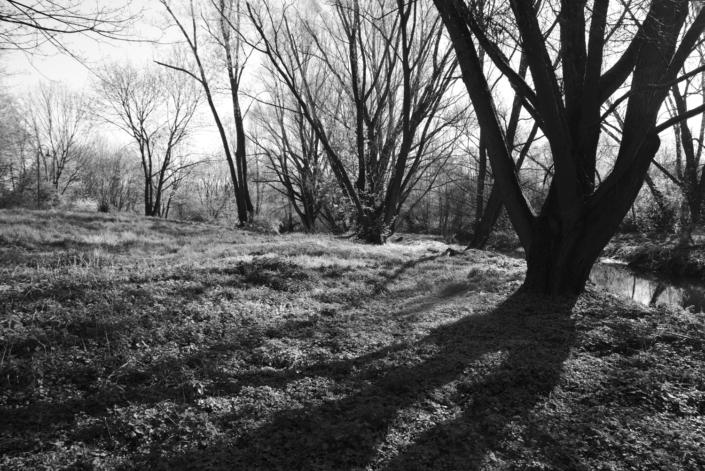 Weiden im Gegenlicht