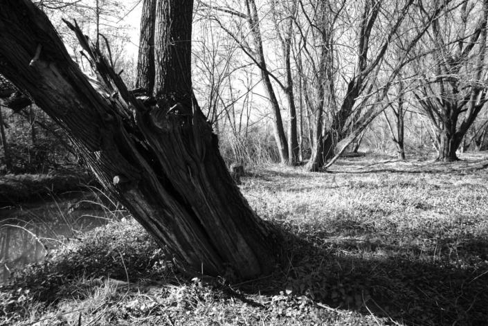 Schräger Baum in SW
