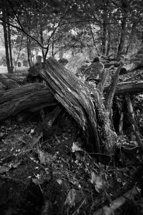 Abegbrochern Baum in SW
